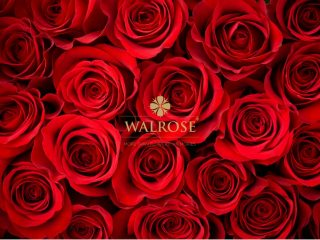 walrose-aranjamente-florale-brasov-florarie-brasov-flori-la-cutie-flori-nunta-buchet-de-mireasa-nasa-aranjament-floral-prezdiu-lumanare-nunta-botez