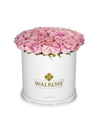 cutie mare rotunda trandafiri roz walrose