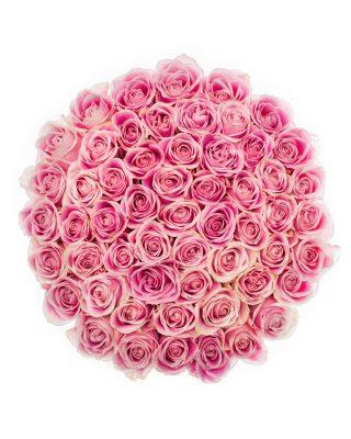 trandafiri roz walrose
