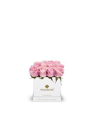 wal010w_f cutie mica alba trandafiri roz walrose