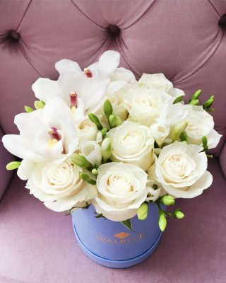 walrose misty rose2 livrare flori brasov walrose